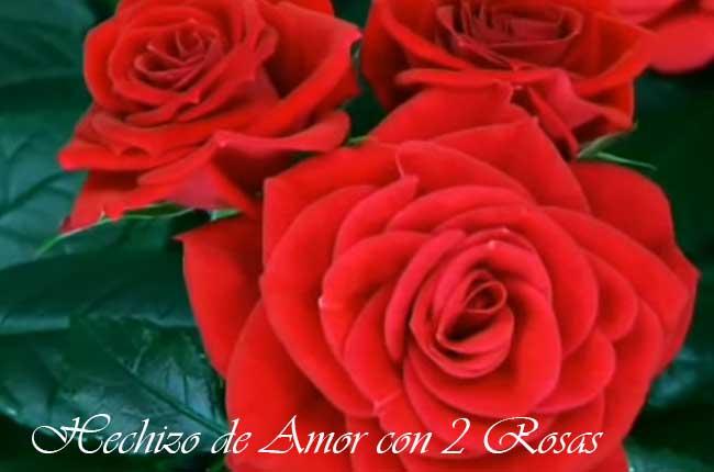 Hechizo de amor con rosas